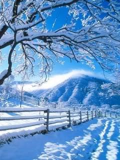 http://www.picturesofwinter.net/winterscene-55.jpg