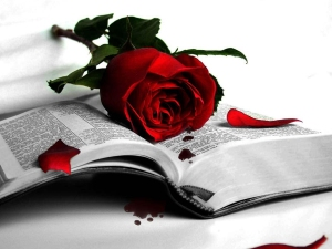 http://wondrouspics.com/wp-content/uploads/2011/11/wonderful-love-me-red-rose-wallpaper.jpg