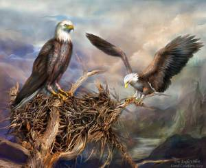 Image Credit: http://www.romanceworks.com/ 01_Gallery%20Pics/01_Spirit %20Of%20The%20Wild/ 107_TheEaglesNest1_Pic.jpg