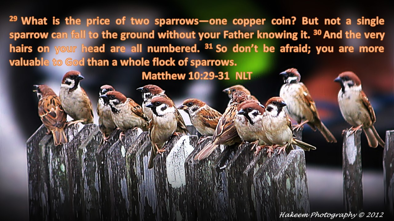Matthew 10-29-31