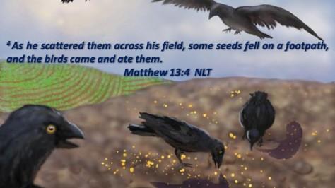 Birds ate seeds